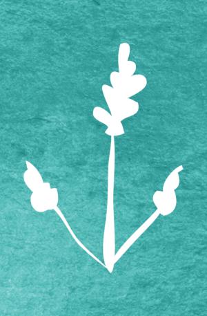 Lavandula hybrida pattern