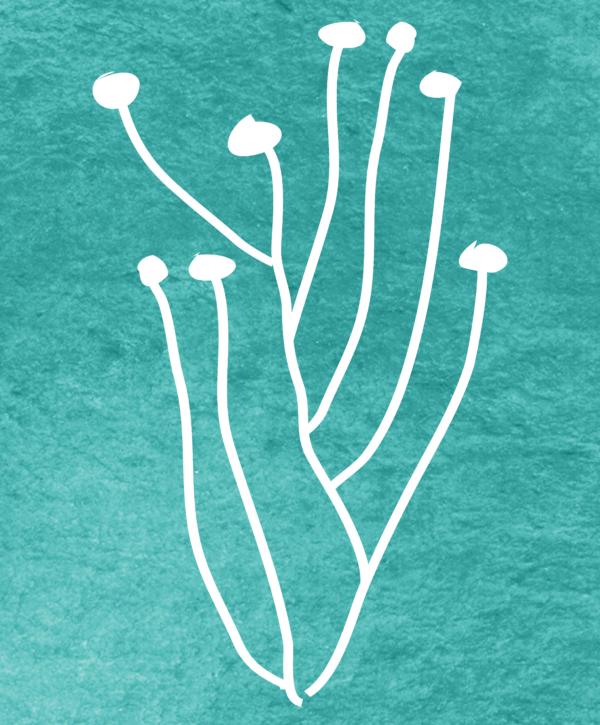 Santoline chamaecyparissus pattern