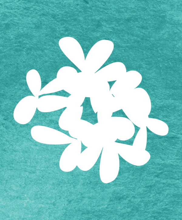 Thymus vulgaris pattern