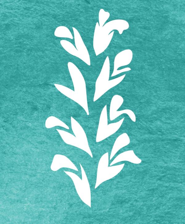 Salvia officinalis pattern
